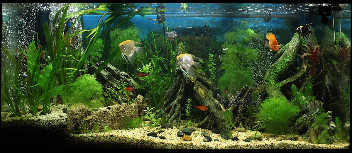 Дизайн аквариума 300 литров