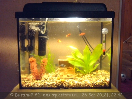 Каких рыб можно поселить в 25 литровый аквариум