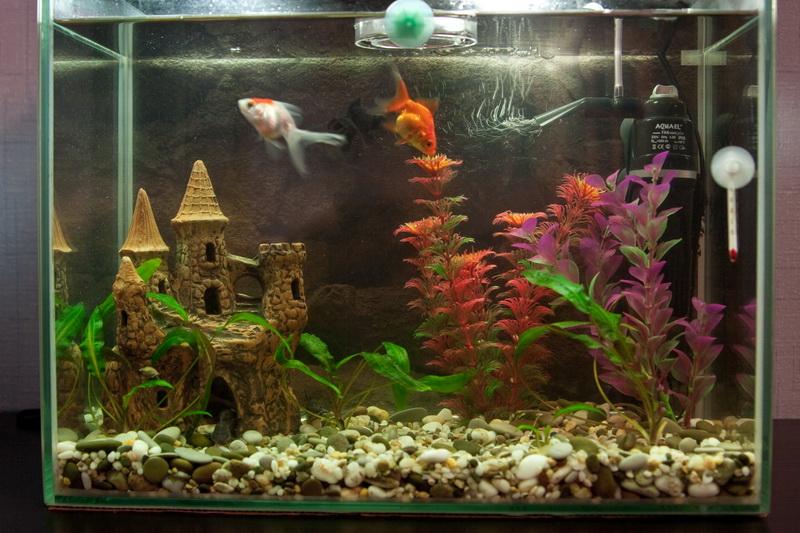 Фото дизайна аквариума на 100 литров