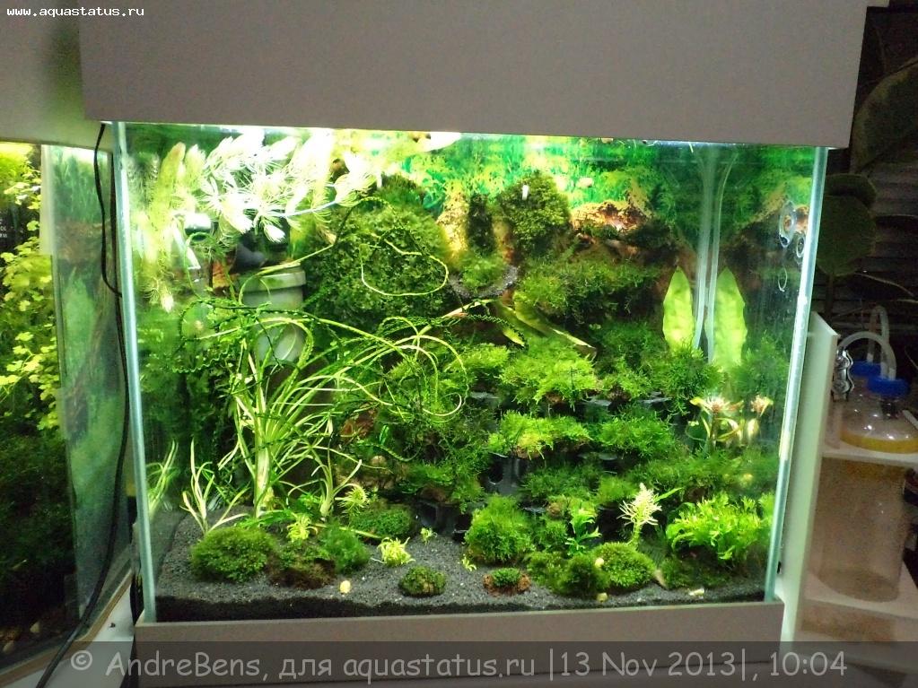 Фон в аквариум из яванского мха видео
