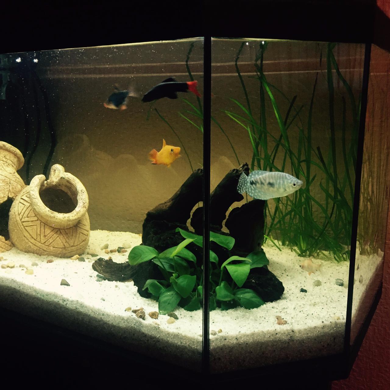 ПТО дохнут рыбы в аквариуме снижения