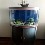 аквариум .jpg