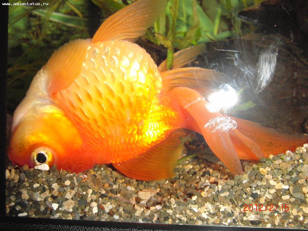 одна фото дохлых аквариумных рыбок забудьте
