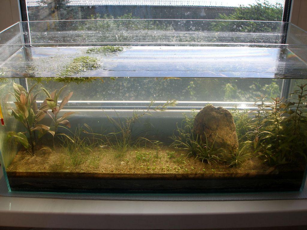 земля в аквариуме фото очередь