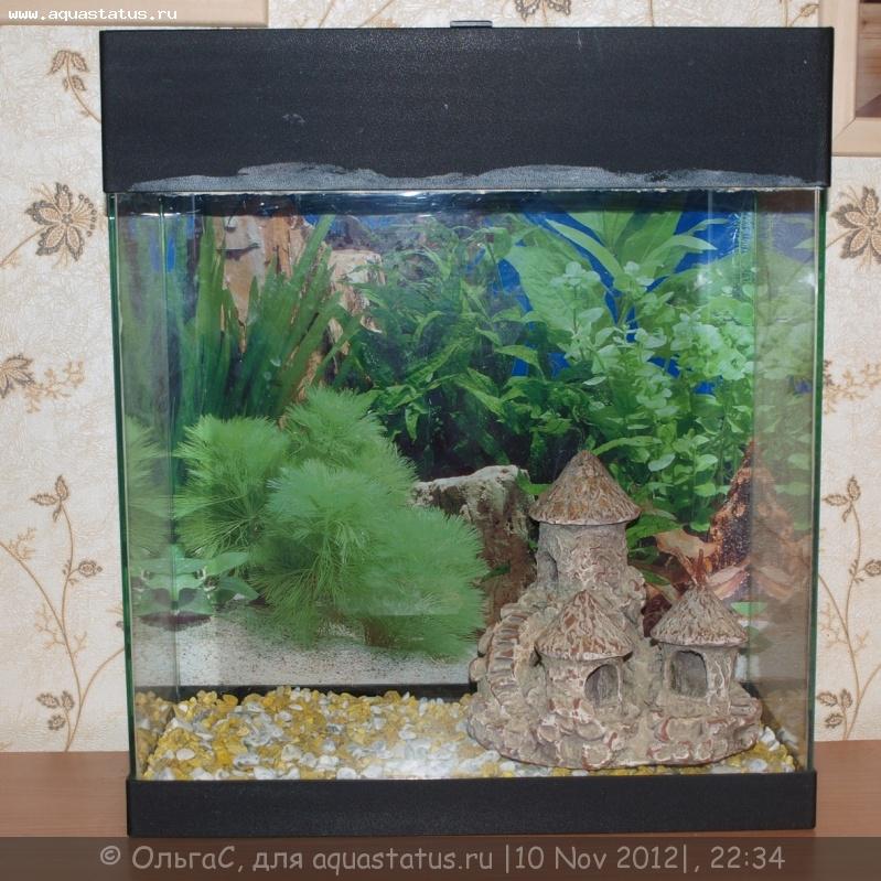 фото аквариум на 30 литров