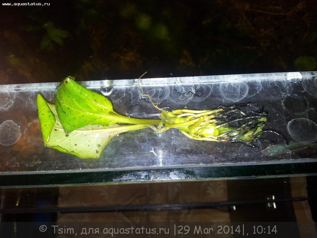 Почему грунт чернеет в аквариуме