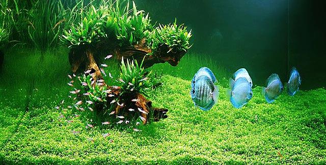 Как вырастить водоросли для аквариума в домашних условиях 48