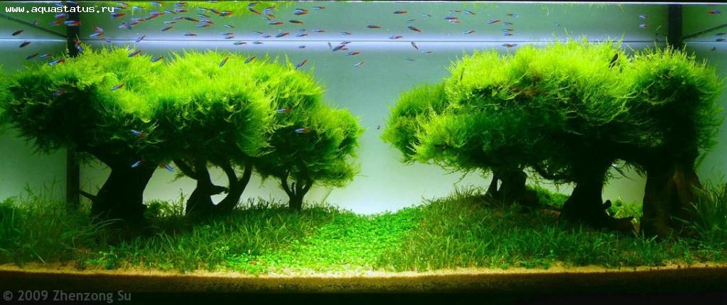 Как вырастить водоросли для аквариума в домашних условиях 63