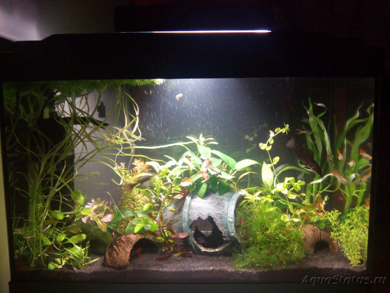 Как сделать воду в аквариуме мягче фото 584