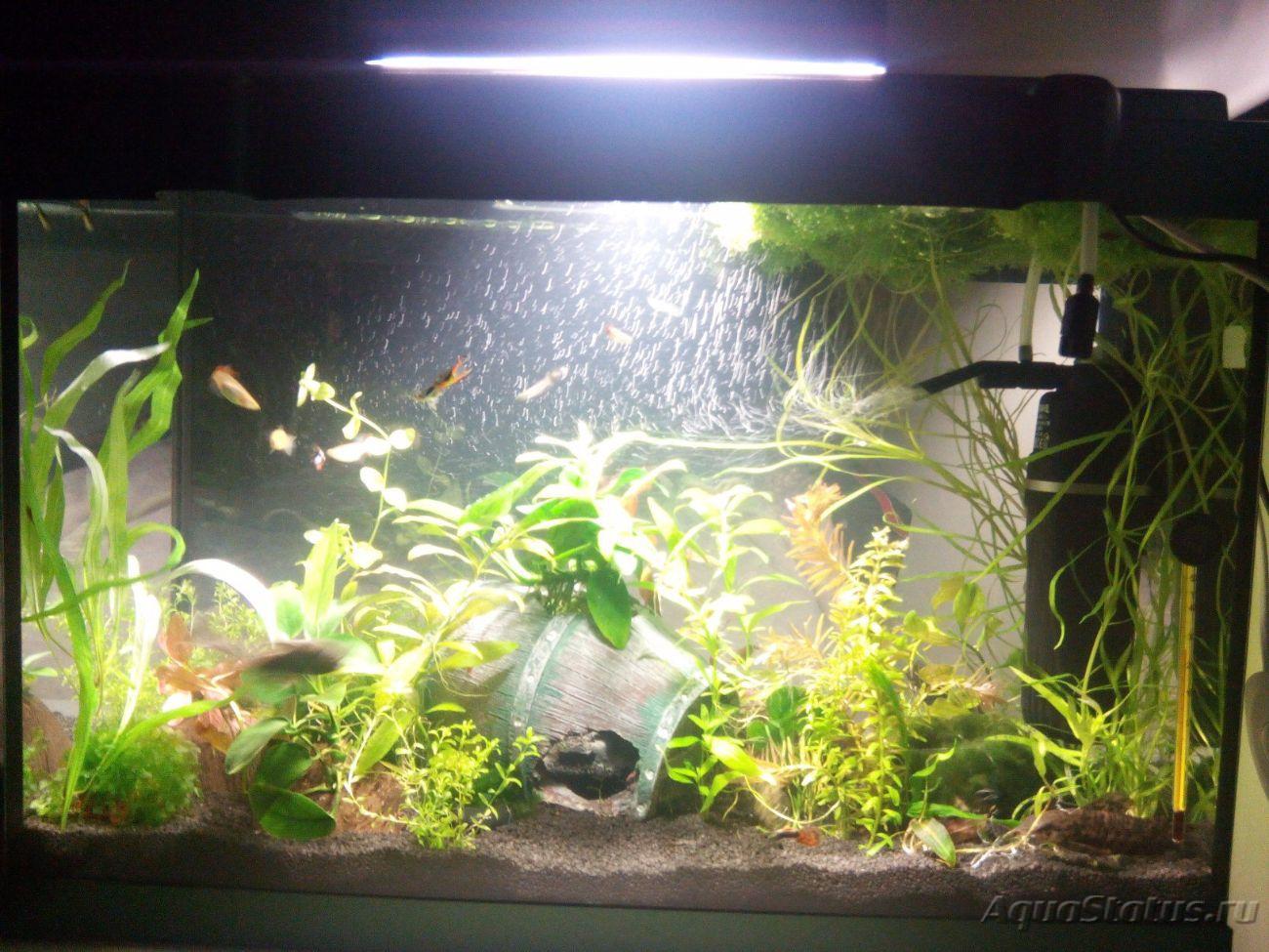 Как сделать воду в аквариуме мягче фото 638