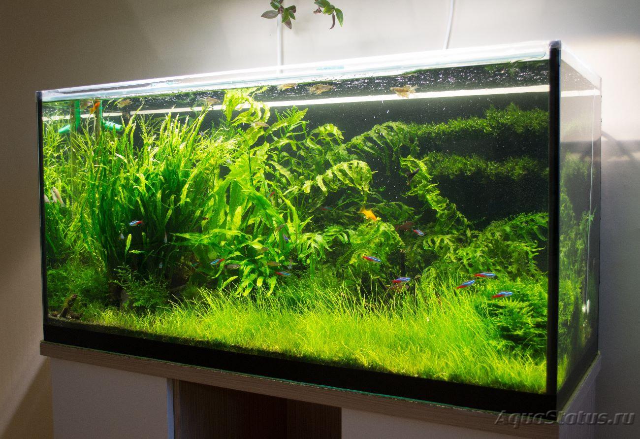 фото аквариумов травников примеру казанского барса