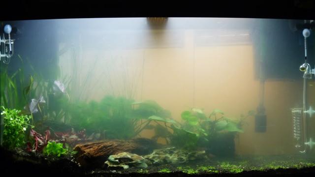 мутная вода в аквариуме муть в аквариуме