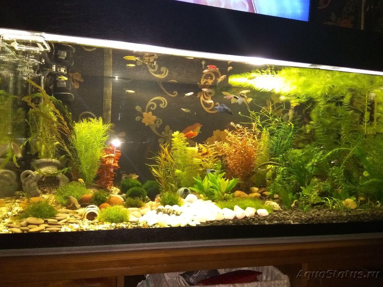 Как сделать воду в аквариуме мягче фото 10