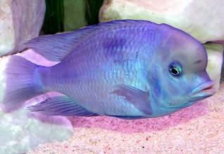 Мой аквариум 100 литров НастенА  - 24117.jpg