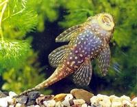 Мой аквариум 100 литров НастенА  - .jpg