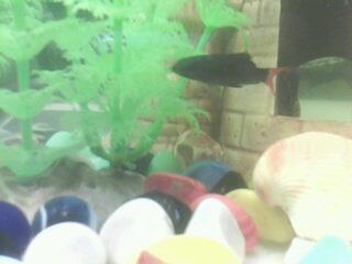 Помогите опознать рыбку опознание рыб  - IMG0050A.jpg