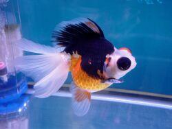 Золотая рыбка - 67_3.jpg