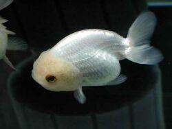 Золотая рыбка - 67_4.jpg