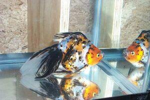 Золотая рыбка - 67_9.jpg