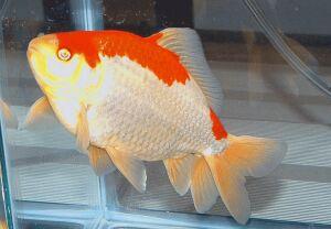 Золотая рыбка - 67_10.jpg