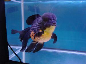 Золотая рыбка - 67_12.jpg