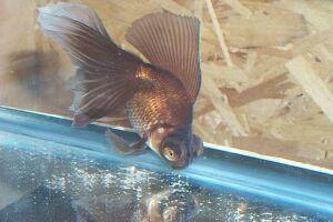 Золотая рыбка - 67_13.jpg