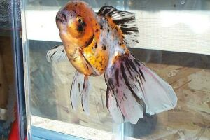 Золотая рыбка - 67_15.jpg