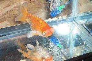 Золотая рыбка - 67_16.jpg