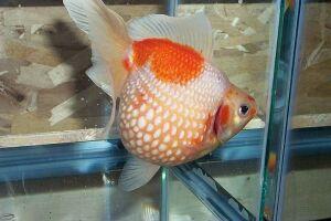 Золотая рыбка - 67_17.jpg