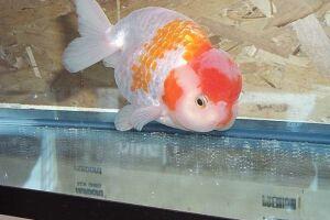 Золотая рыбка - 67_18.jpg