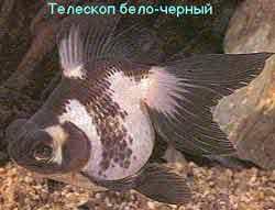 Золотые рыбки и объем аквариума - зат3.jpg