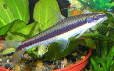 Название рыбок?? - 1231853873_33.jpg