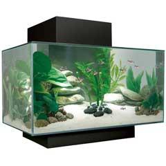 Fluval EDGE Aquarium - hagen_edge.jpg