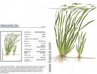 Аквариумные растения - опознание растений. - i.jpeg