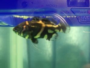 Помогите опознать рыбку опознание рыб  - IMGP75241.JPG