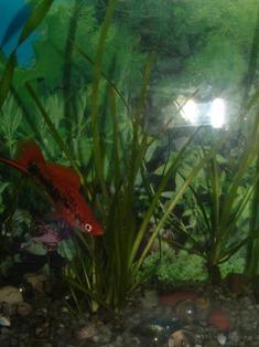 Рыбка случайно в кадр залезла:  - DSCF0021.JPG