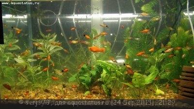 Фото аквариумов объемом от 31 до 100 литров - 28173.jpg