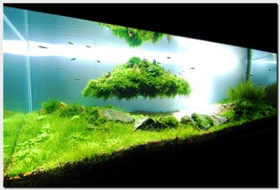 Акваскейп месяца: август 2010: Beyond the Nature  - 1_plantedtank_islandfull1.jpg