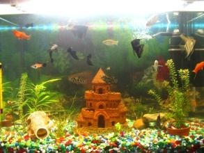 Мой аквариум 80 литров лёва  - IMG_0790.jpg