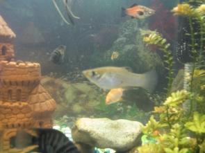 Помогите определить рыбу - IMG_0857.jpg