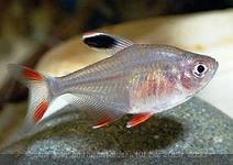 Помогите опознать рыбку опознание рыб  - i (1).jpg