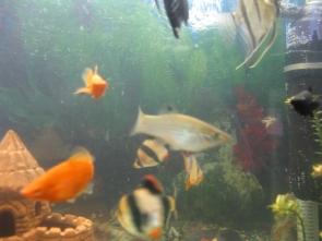 Помогите определить рыбу - IMG_0856.jpg