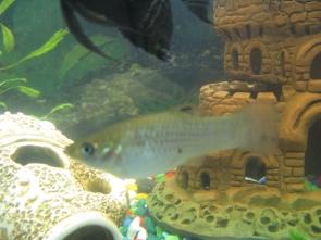 Помогите определить рыбу - IMG_0877.jpg