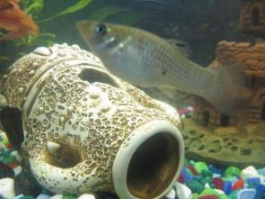 Помогите определить рыбу - IMG_0876.jpg