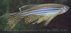 Помогите опознать рыбку опознание рыб  - i (2).jpg