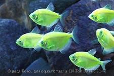 Помогите опознать рыбку опознание рыб  - шшш.jpg