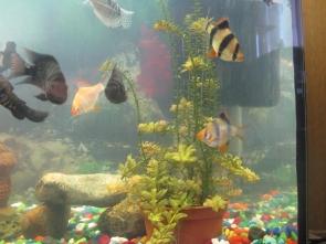 Желтеют растения в аквариуме - IMG_0887.jpg