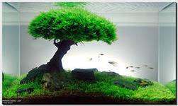 Все о выращивании аквариумных растений доступными словами - скейп.jpeg