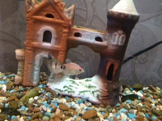 Помогите опознать рыбку опознание рыб  - image (2).jpeg