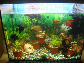 Мой аквариум 80 литров лёва  - IMG_0910.jpg